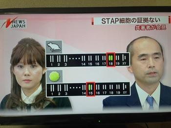 小保方ES細胞疑惑 NEWSJAPAN.jpg